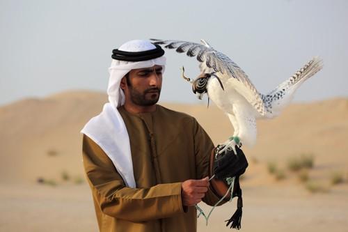 Falcon Hoods